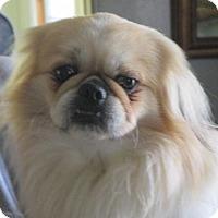 Adopt A Pet :: Blaine - Oakdale, TN