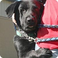 Staunton Va Basset Hound Retriever Unknown Type Mix Meet Trip A Dog For Adoption