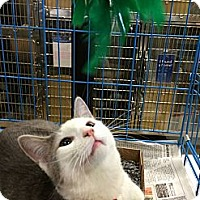 Adopt A Pet :: HARLEY - West Lafayette, IN