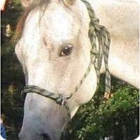 Adopt A Pet :: Sierra - Dewey, IL