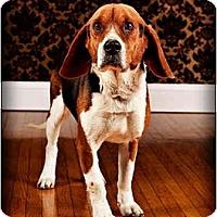 Adopt A Pet :: Kennedy - Owensboro, KY