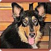 Adopt A Pet :: Utah - Riverside, CA