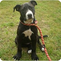 Adopt A Pet :: CoCo - Adamsville, TN