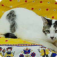 Adopt A Pet :: Charlie - Sunderland, ON