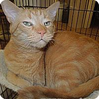Adopt A Pet :: Luke - Medina, OH