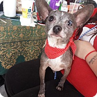 Adopt A Pet :: Zuma - Porter Ranch, CA