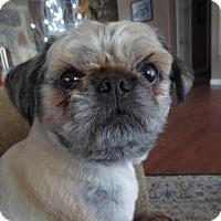 Adopt A Pet :: Benny - Saskatoon, SK