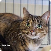 Adopt A Pet :: Bristow - Merrifield, VA