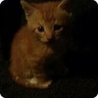 Adopt A Pet :: Natsu - Lawrenceville, GA