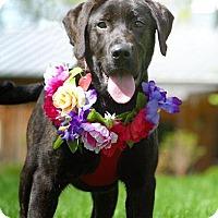 Adopt A Pet :: Waynoka - Thompson's Station, TN