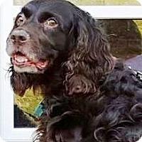 Adopt A Pet :: Abby - Gettysburg, PA