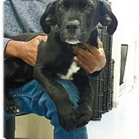 Adopt A Pet :: Olmito - Broomfield, CO