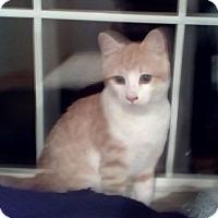 Adopt A Pet :: Ozzy - Kirkwood, DE