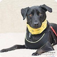 Adopt A Pet :: Aston - Frisco, TX