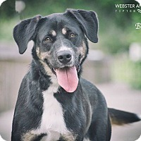 Adopt A Pet :: Belle - Webster, TX
