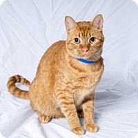 Adopt A Pet :: Mooshka - Tulsa, OK
