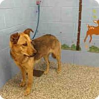 Adopt A Pet :: URGENT ON 9/30  San Bernardino - San Bernardino, CA