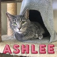 Adopt A Pet :: Ashlee - Queenstown, MD