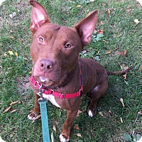 Adopt A Pet :: Buster Brown - Oak Park, IL