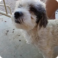 Adopt A Pet :: Swirly - San Tan Valley, AZ
