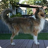 Adopt A Pet :: Jake - Mission, KS