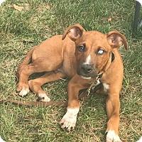 Adopt A Pet :: Isaiah - New Oxford, PA