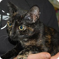 Adopt A Pet :: Vixen - Brooklyn, NY
