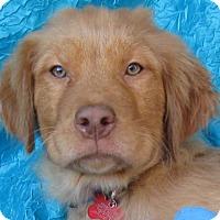 Adopt A Pet :: Brett Voss - Cuba, NY