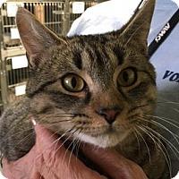 Adopt A Pet :: Ringo - Voorhees, NJ
