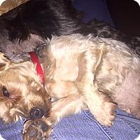 Adopt A Pet :: Gem - Prole, IA