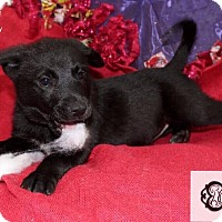 Adopt A Pet :: Annie - DeForest, WI