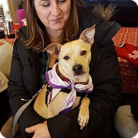 Adopt A Pet :: Jack Jack - North Brunswick, NJ