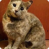 Adopt A Pet :: Julia - Jeannette, PA