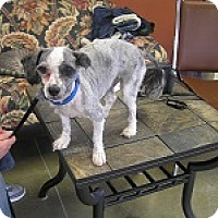 Adopt A Pet :: Dixie - Creston, BC