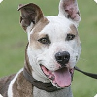 Adopt A Pet :: Danie - North Fort Myers, FL