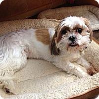 Adopt A Pet :: Kouba - Minnetonka, MN