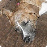 Adopt A Pet :: Katy - Rome, NY
