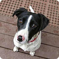Adopt A Pet :: Fiona - Chattanooga, TN