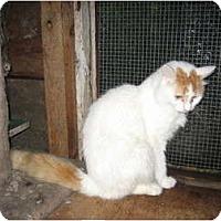 Adopt A Pet :: Sherwood - Portland, ME