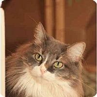 Adopt A Pet :: Phoebe - Bonita Springs, FL