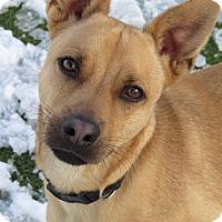 Adopt A Pet :: Fletch - Meridian, ID