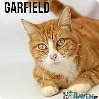 Adopt A Pet :: Garfield - Fairhope, AL