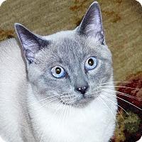 Adopt A Pet :: Thunder - Bentonville, AR