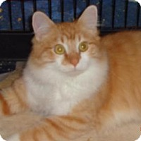 Domestic Mediumhair Cat for adoption in Loganville, Georgia - Parkview