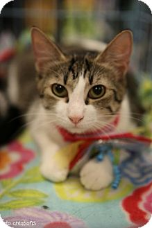Domestic Shorthair Cat for adoption in Olive Branch, Mississippi - Geneva