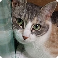 Adopt A Pet :: Snow White - Rockaway, NJ
