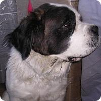Adopt A Pet :: Lola - Yucaipa, CA