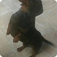 Adopt A Pet :: Peyton - Albemarle, NC