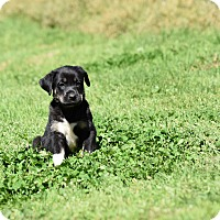 Adopt A Pet :: Baird - Groton, MA