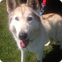 Adopt A Pet :: Anya - Fennville, MI